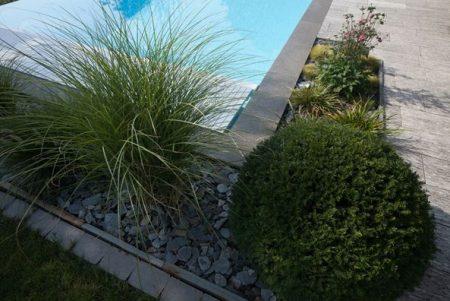 piscine aménagement plante idée