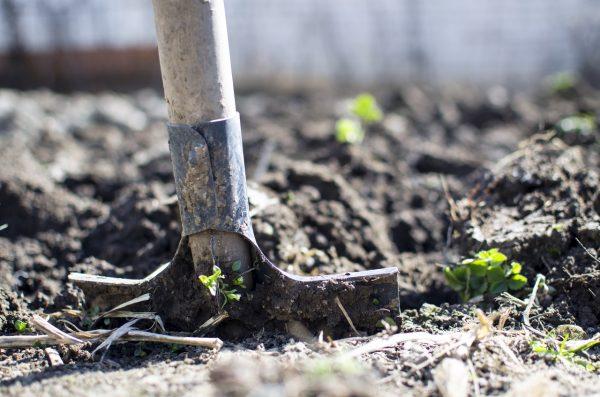 potager plantation photo