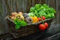 Légumes potager photo